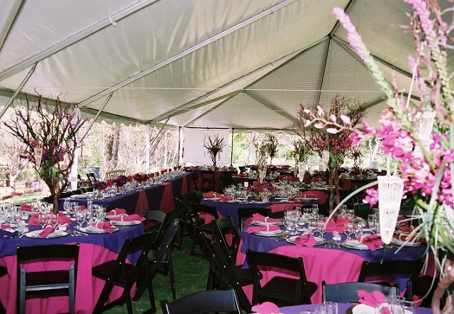 40 x 80 tent,Fuscia & Regal Purple linens, 8 ball strand lighting